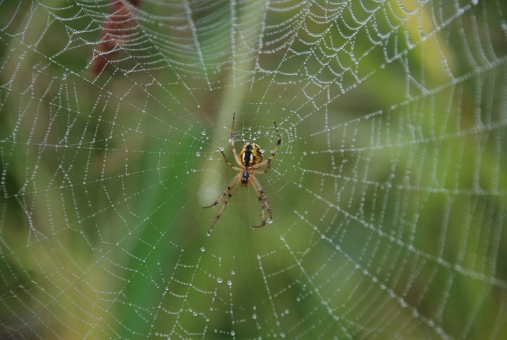 spider-516653_960_720
