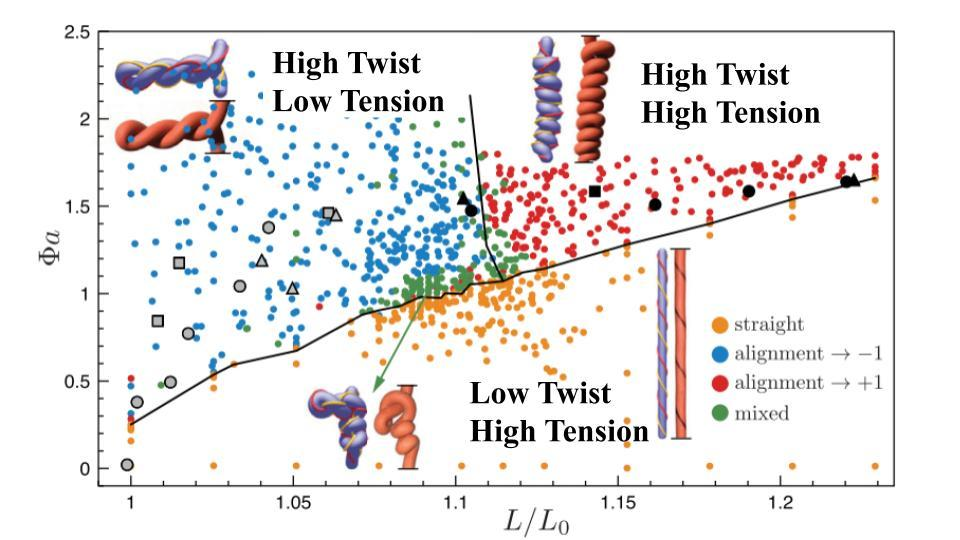 Phase diagram of fiber conformations as a function of twist and stretch.